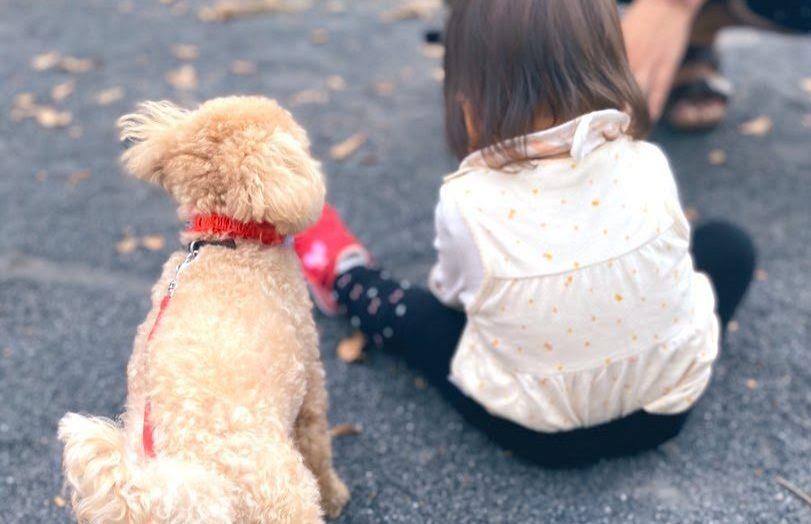 赤ちゃんと犬の初対面の記録