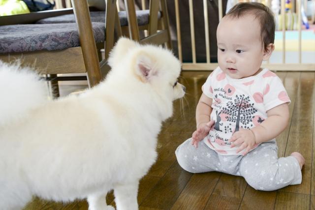 赤ちゃんと犬との生活|赤ちゃんを迎えるためのオススメグッツ