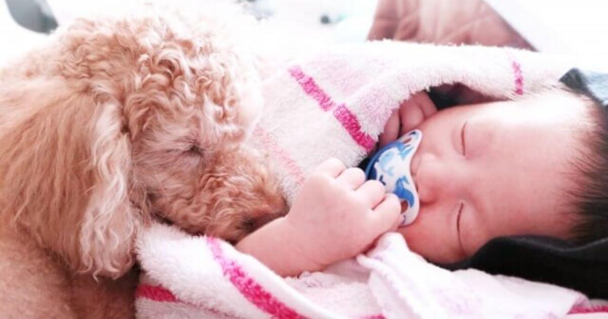 犬と赤ちゃんの安全