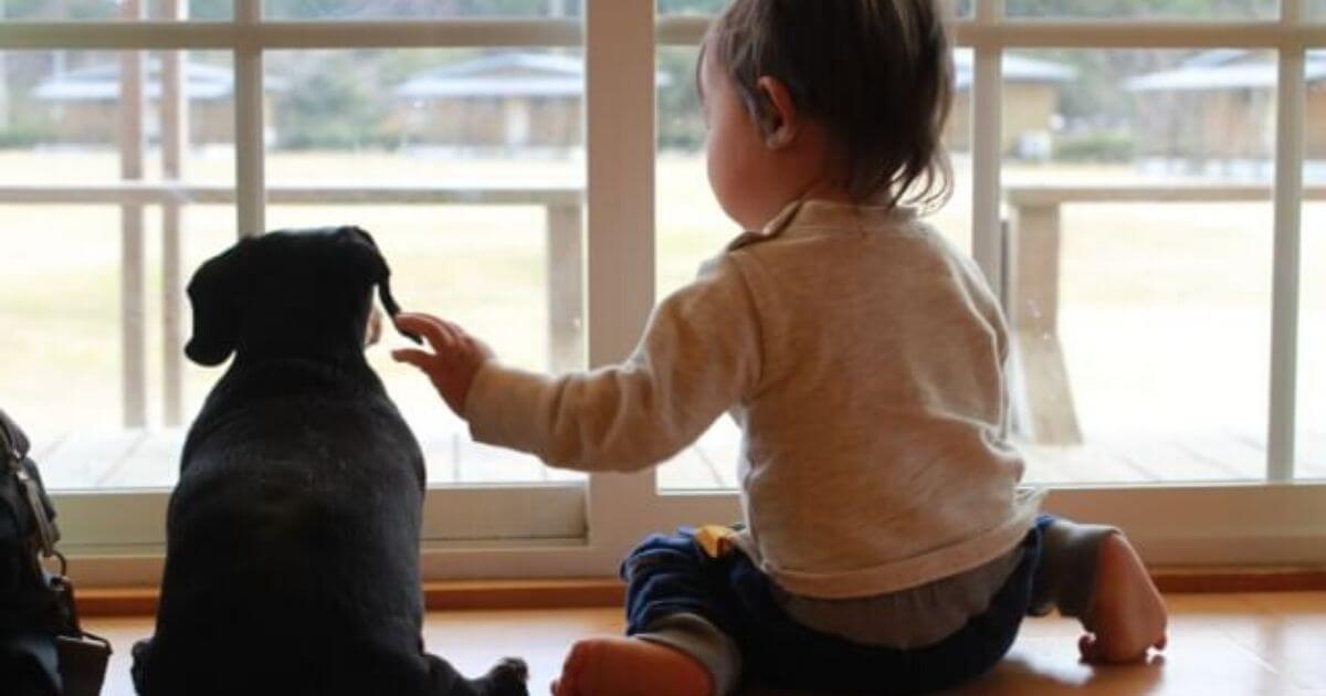 赤ちゃんと犬の同居